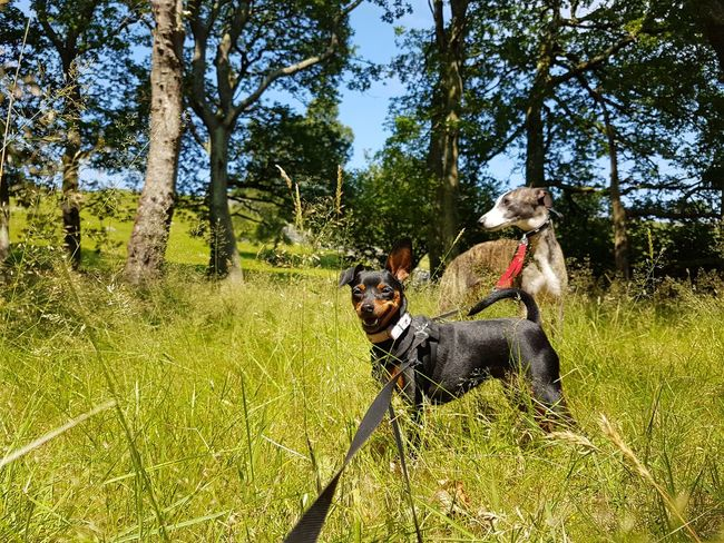 Dog Domestic Animals Animal Themes Tree Outdoors Nature Grass Pets Growth Relaxing Taking Photos Outdoor Photography Country Life NatuarallyBeautiful Having Fun Countryside Mammal Day One Animal Full Length No People Sky Pet Portraits