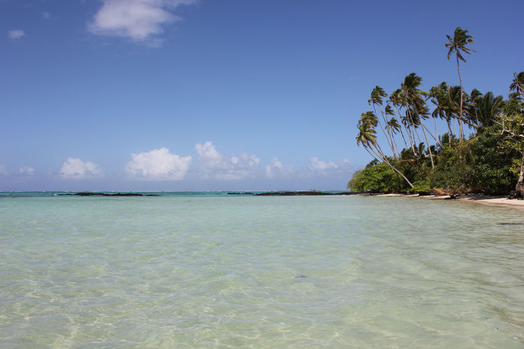 Clear Water Fiji Green Holiday Lush Pacific Island Pacific Ocean Palm Palm Tree Palm Trees Paradise Peace Reef Relaxation Savai'i Savai'i, Samoa South Pacific Sun Light Tonga Tranquility Tropical Climate Tropical Paradise Vegetation War Warm