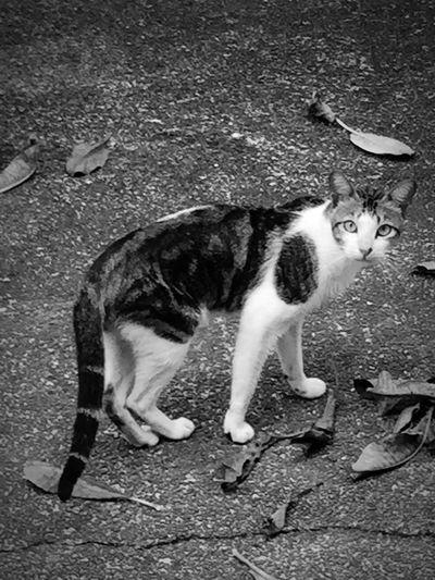 Hi there!? Cat