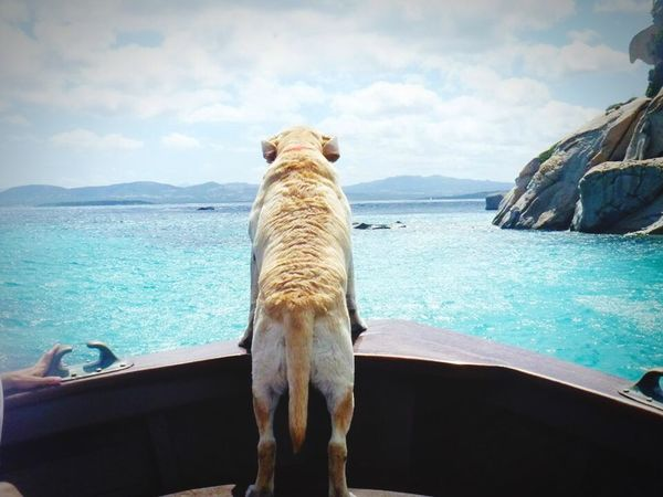 Animal Themes Water Mammal One Animal Sea Dog Sky Domestic Animals Day Pets No People Cloud - Sky Nature Outdoors Horizon Over Water Beauty In Nature