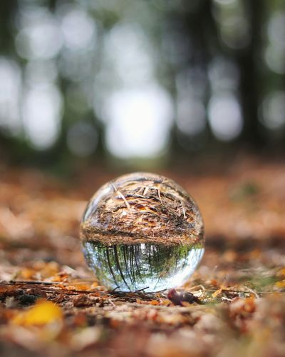 Close-up of crystal ball in forest