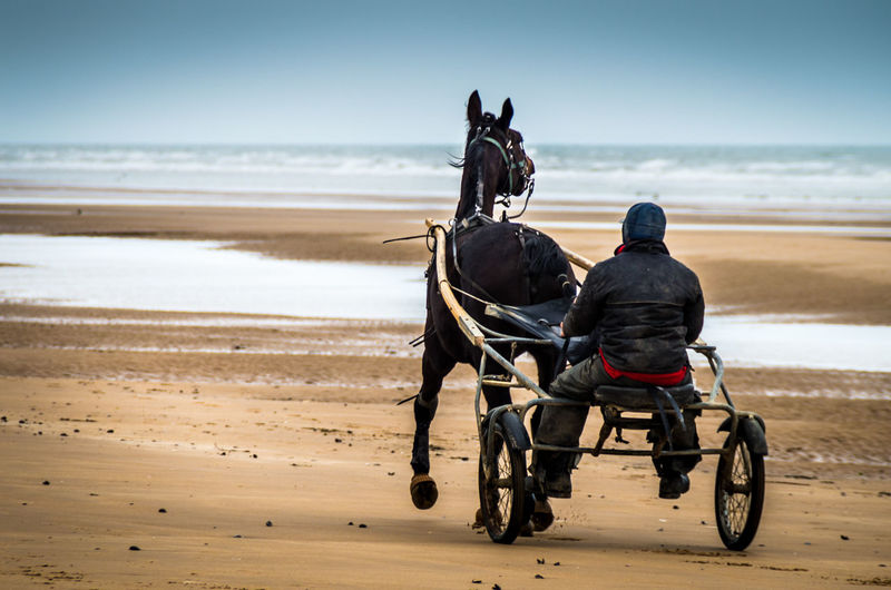 Rear view of man riding horse cart on beach