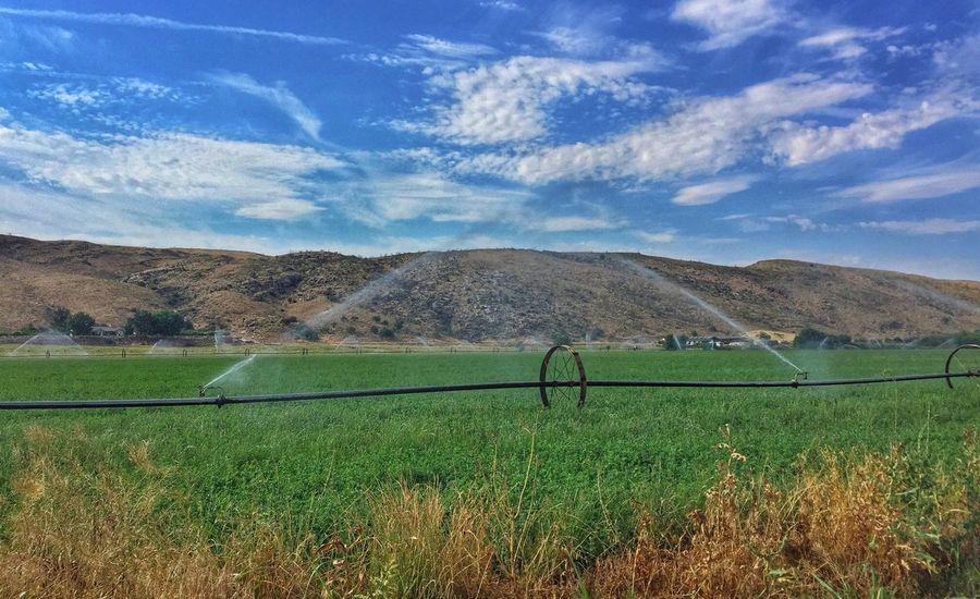 Sprinklers Grass Hay Alfalfa Field Field Irrigation Summer Green Green Color Water