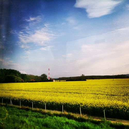 view from the bus window...