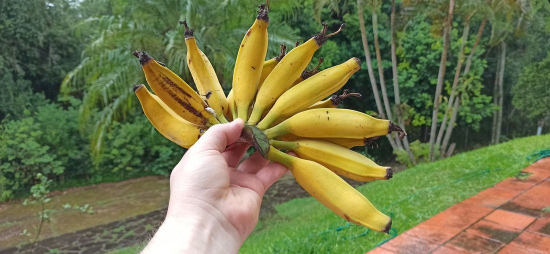 Cropped image of person holding yellow fruit