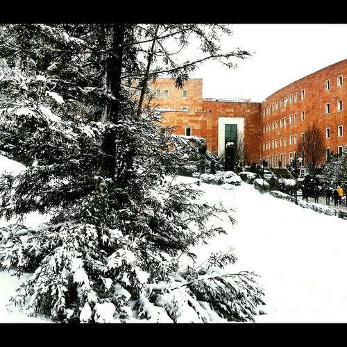 Yeditepeuniversity Yeditepeuniversitesi Snow Turkey Photooftheday Love Cold Winter ❄⛄ Peaceful Beautiful Istanbul Turkey