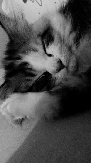 A face that melts your heart ..!! Domestic Animals Animal Themes Sleeping Lying Down Close-up Cat Indoors  One Animal Domestic Cat Pets Blackandwhite Black And White Black & White