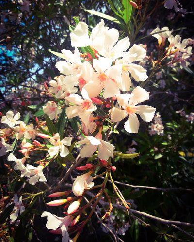 Photography Fotografia FotoDelDia Montevideo Uruguay Photooftheday Jardin Tree Branch Blossom Close-up Plant Life Pollen Petal