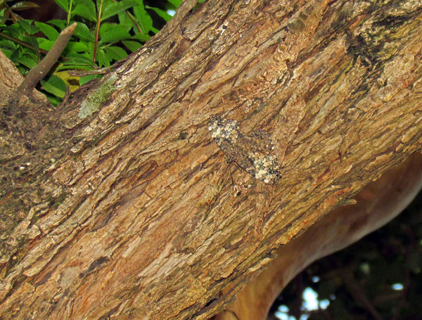 Butterfly disguised in tree Beauty In Nature Butterflies Butterfly Close-up Disguise Growth Hidden Hidden In The Trees Hidden Places Hide Insects  Mimesis Mimetism Mimicry Natural Pattern Nature Textured  Tree Tree Trunk Wood - Material