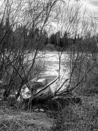 Small boat at lake Midtsjøvannet Bare Tree Boat Lake Lakeshore Nautical Vessel No People Small Boat