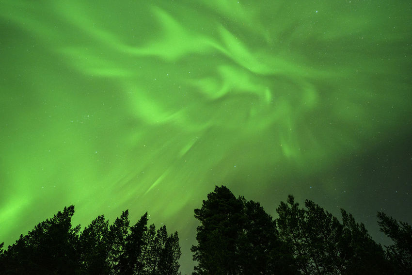 Aurora Borealis Aurora Polaris Aurora Auroraborealis Northern Lights Planet Earth Landscape_photography Sweden Tranquility Tranquil Scene Nature Photography Astronomy Tree Galaxy Star - Space Silhouette Sky Green Color Treetop Space And Astronomy