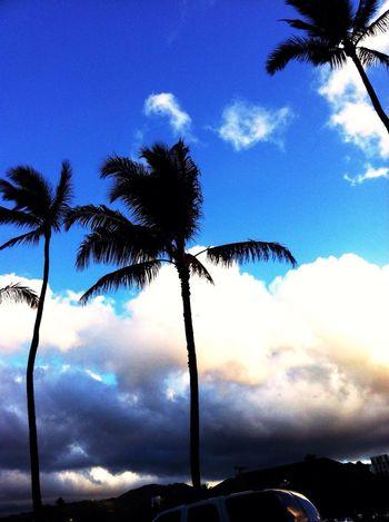 missing' HI Hawaii Aloha Palms Sky
