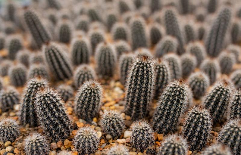 Full frame shot of small cactus plant