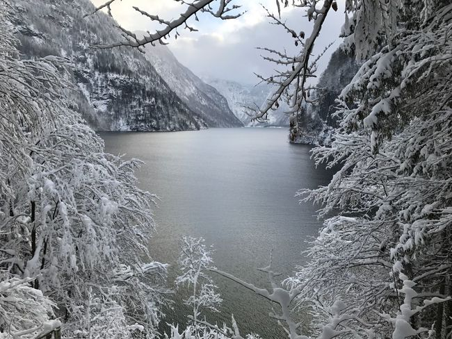 Königssee Water Nature Scenics Beauty In Nature Outdoors No People Tree Cold Temperature Mountain Winter Frozen