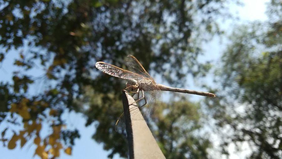 Dragonfly EyeEm