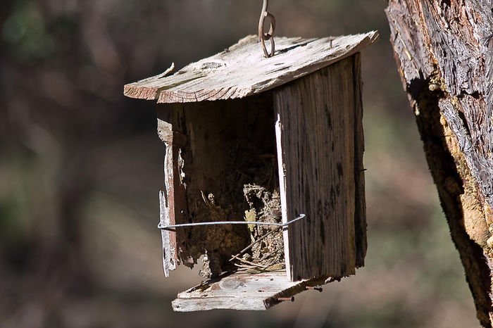 Wood - Material Focus On Foreground Animals In The Wild Animal Wildlife Animal No People Birdhouse Bird Nature Tree Trunk