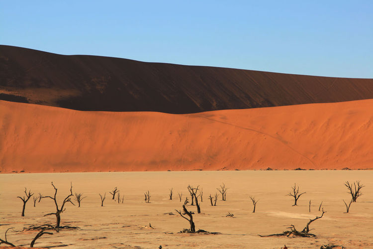 Arid Climate Beauty In Nature Blue Clear Sky Deadvlei Desert Extreme Terrain Famous Place Geology Landscape Mountain Namibia National Park Nature Non-urban Scene Outdoors Physical Geography Remote Scenics Tourism Tourist Tranquil Scene Tranquility Travel Destinations Vacations