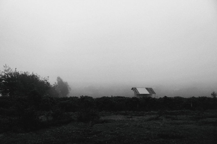 BnW landscape Blackandwhite Day Foggy Landcape Landscape Nature No People Outdoors Sky Tree