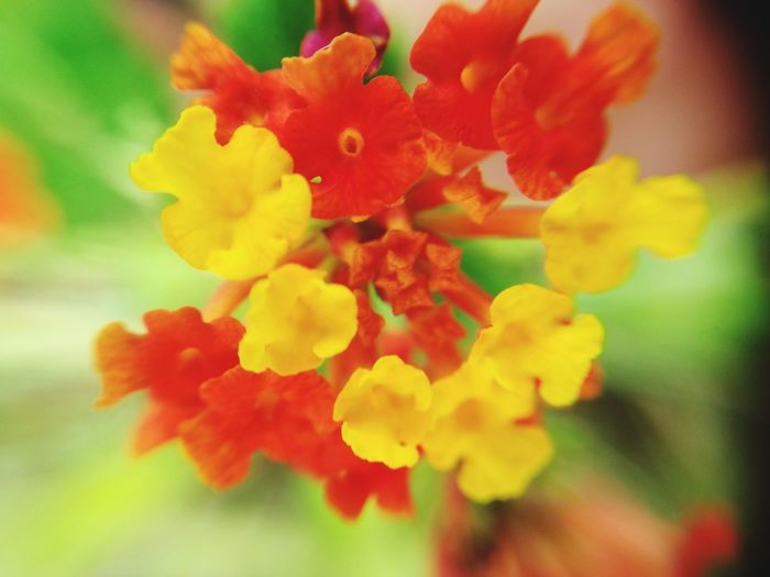 Flower Yellow Flower Orange Flower Nature Yellow Close-up Day No People Plant Beauty In Nature Fragility