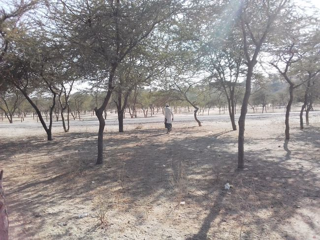 Landscape_photography Colourful Rajasthan Desert Landscape Desrt Scenes Trees Tree Outdoors Sand Day Bare Tree Nature Sky