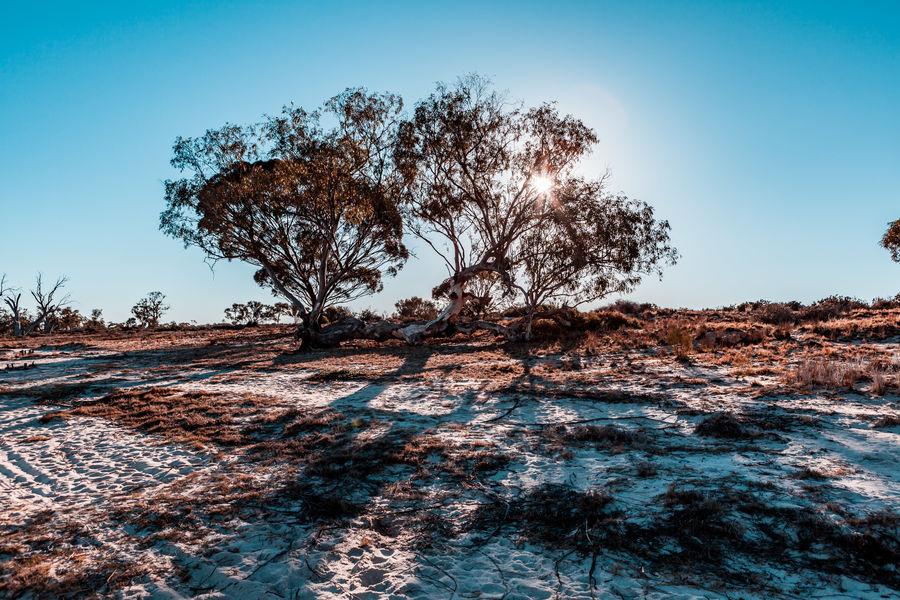 Sun shining through trees in South Australia Australia Nature Outback Riverland South Australia Landscape Mallee Outback Australia Scenics