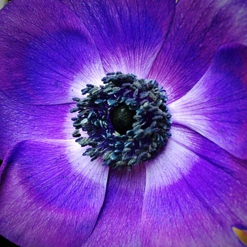 🌷 Flower Purple Nature Nature Photography Flower Photography Close-up Taking Photos Simplicity