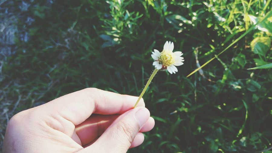 Cropped Hand Holding White Flower