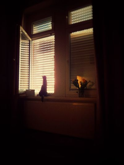 Warm Light Warm Colors Cat Lovers Cat Snapseed Black Cat Cats Cat At Window Shiloutte Photography Shilhouette Cat In Front Of Window Pets Window