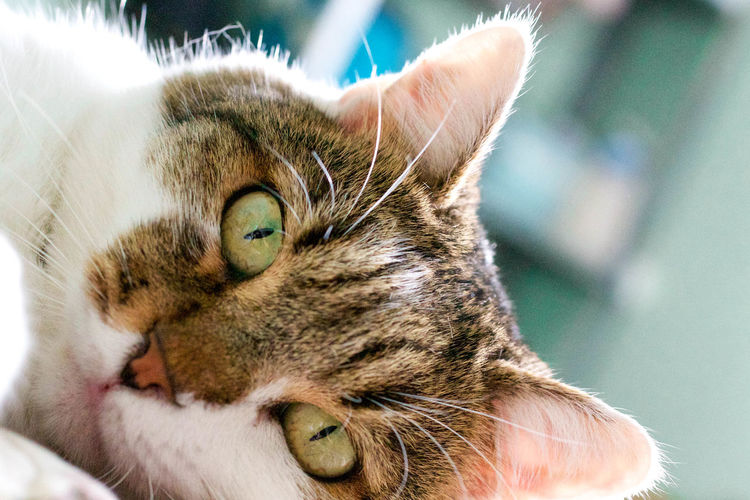 Looking At Camera Macro Photography Animal Themes Cat Cat Eyes Close-up Day Domestic Animals Domestic Cat Feline Focus On Foreground Green Eyes Looking At Camera Macro Mammal No People One Animal Outdoors Pets Portrait Whisker