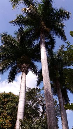 Tree Coconut Trees Coconut Palm Tree Nature NaturezaMaravilhosa