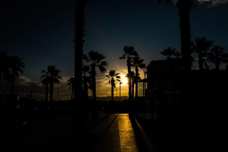 Backlight Backlit Barcelona Beauty In Nature Fujifeed Fujifilm_xseries Growth Light Nature Night No People Outdoors Palm Tree Shadow Shadows & Lights Sky Sunset Tree Vacations X100S Yellow EyeEmNewHere