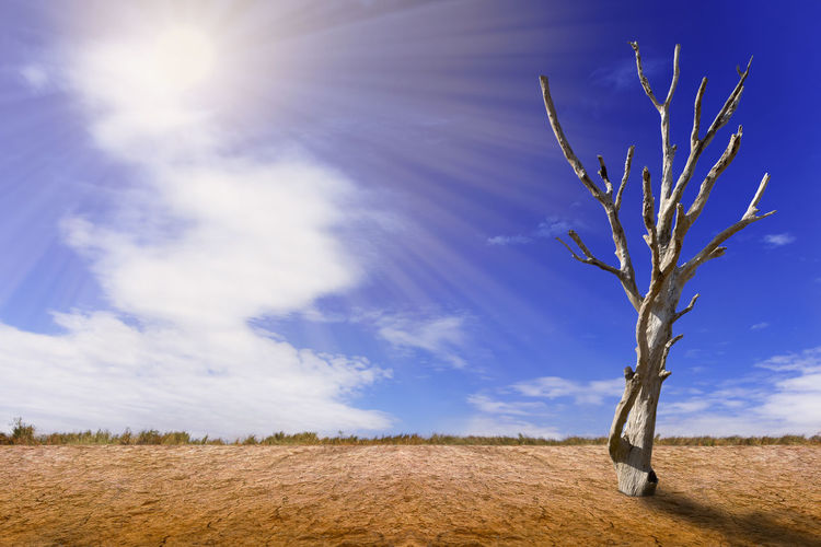 Dead Tree Desert Nature Arid Climate Beauty In Nature Blue Cloud - Sky Day Environment Evening Growth Land Landscape Landscapes Nature No People Outdoors Sand Sky Summer Sunlight Tranquil Scene Tranquility Tree Very Sunny