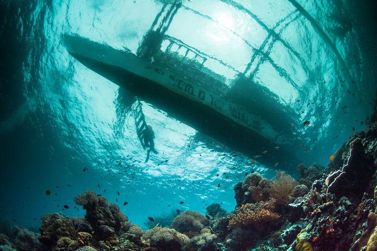 Reefs Under Sea