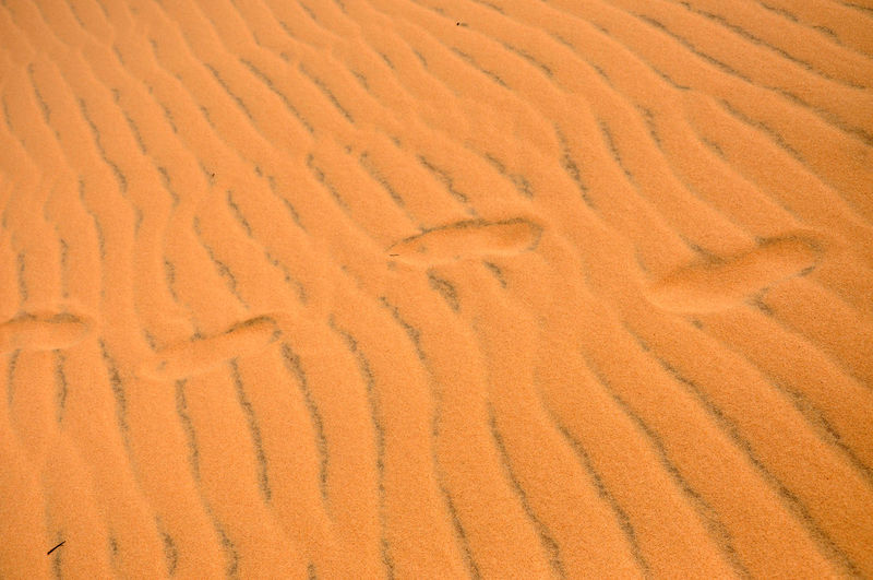 High Angle View Of Footprints At Desert