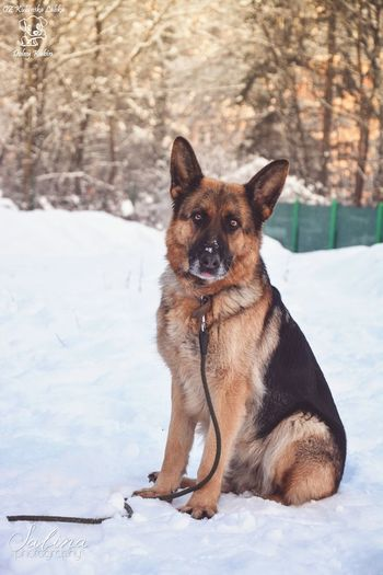 Stella :) She is beautiful, but so sad :( She doesn't like being in the shelter :/ Beautiful Shelter Photography Cute Photo Winter Dog Walking German Shepherd Dog Animal