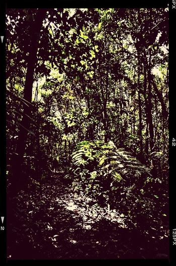 Eyem Nature Lovers  Tropical forest
