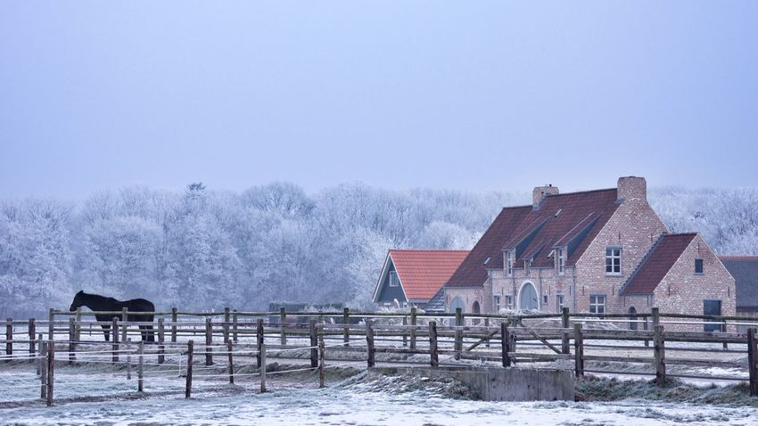 Winter Holland Horses Loneliness House Artistic Photo Snow Covered Life Is Beautiful Picturing Individuality Beautiful View Lovely Weather Special Veluwe Cold Temperature Capture The Moment Sony NEX Aquarell Dutch No People Winter Nature Somewhere From My Point Of View Beauty In Nature Animal