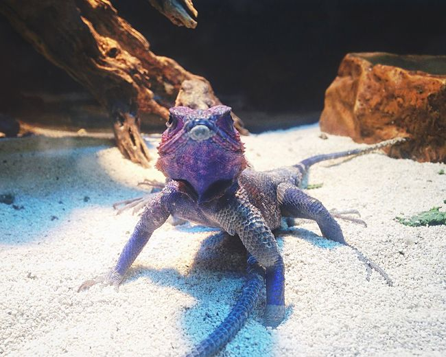 Purple and in charge. Reptiles Pets Cool IPhoneography