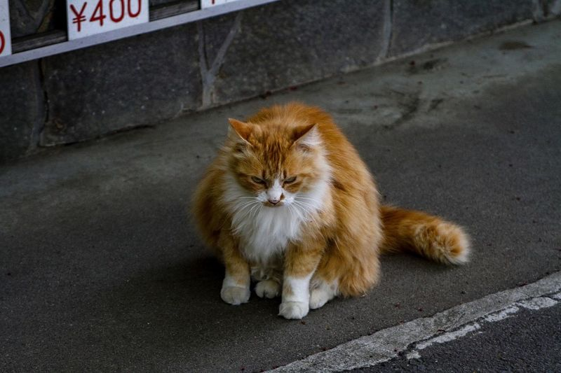 Portrait of a cat on the road