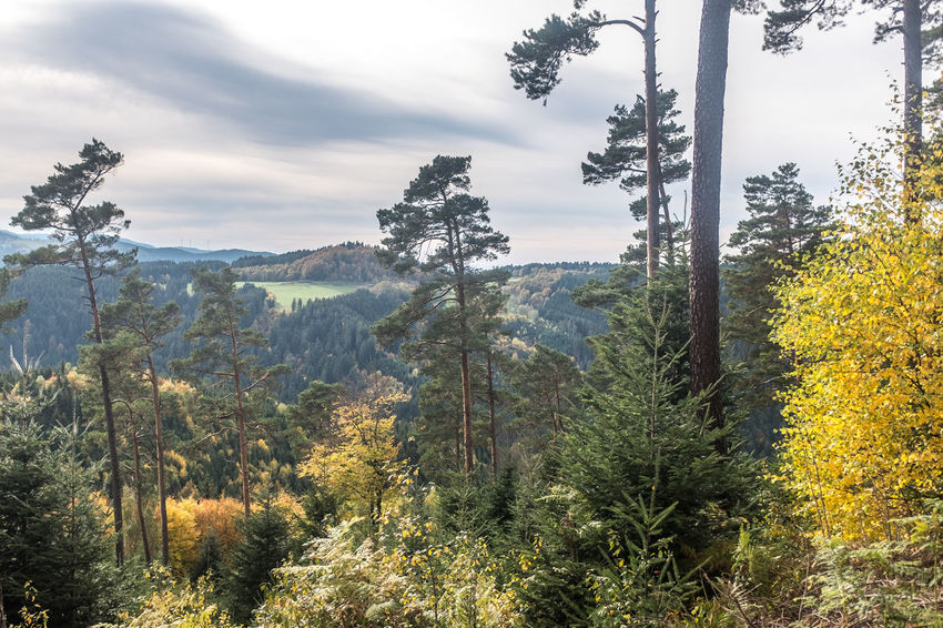 Autumn Beauty In Nature Black Forest Germany Day Evergreen Tree Forest Growth Landscape Lush - Description Mountain Nature No People Outdoors Plant Scenics Sky Social Issues Southern Germany Tree