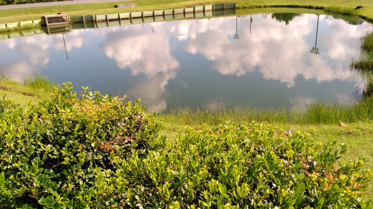 Reflection Of Plants In Calm Water
