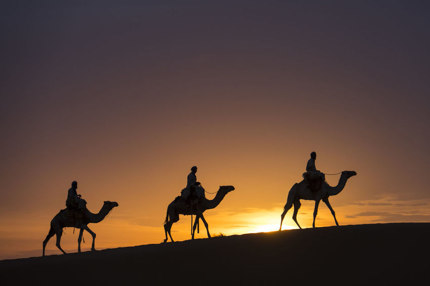 the three holy kings riding on camels into the night Sunset Sunrise Camel Caravan Three Holy Kings Dramatic Scenery Sahara Desert Tourist Destination Morocco Mauritania Sky Silhouette Mammal Orange Color Domestic Animals Land Animal Group Of Animals Animal Themes Camel Domestic Livestock Working Animal Scenics - Nature Animal Wildlife Clear Sky Nature Desert Copy Space Riding
