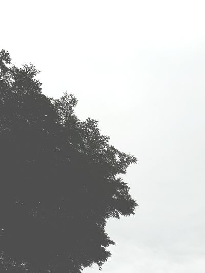 Tree No People