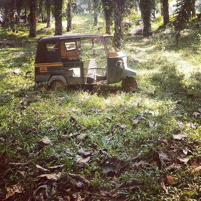 Travelldiaries Autorikshaw Forestseries