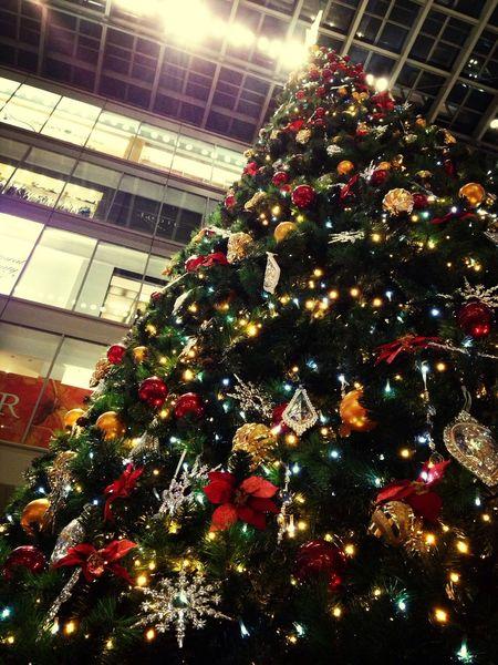 Christmas Tree Christmas Red