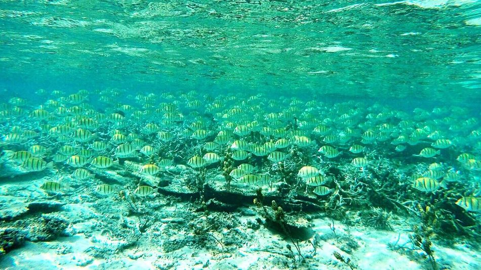 Water Underwater Sea Life Sea School Of Fish Swimming Snorkeling Island Lifestyle Diving Lagoon Tropical