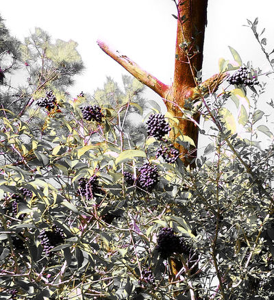 Beauty In Nature Botany Branch Flower Grapes Green Green Color Growing Growth Leaf Nature Nature Outdoors Plant Purple Tree