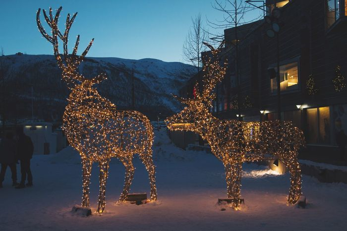 Can i stay by your side? Sigma Sigma 18-35 F1.8 Canonphotography Canon Canon70d Tromsø Winter Illuminated Mammal Snow Christmas Night Christmas Decoration Reindeer Animal Themes