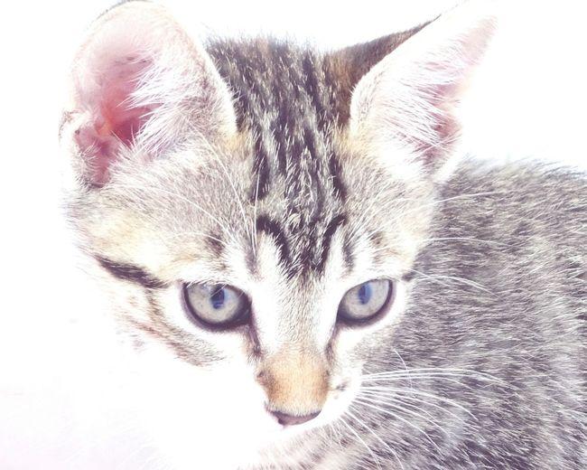 Babycat Cat Animals Domestic Cat Domestic Animals Cute Cats Cute♡ Baby Babygirl