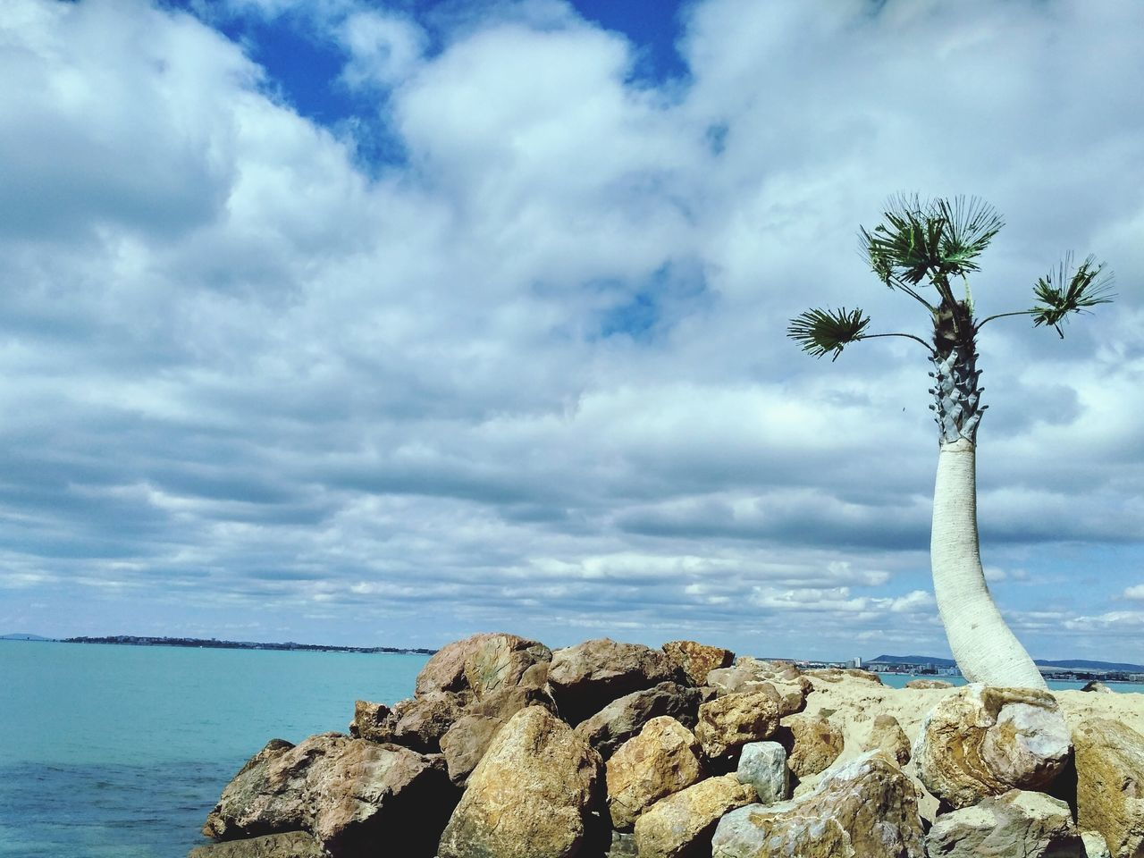 sky, sea, nature, scenics, horizon over water, beauty in nature, rock - object, tranquility, tranquil scene, cloud - sky, outdoors, palm tree, day, water, tree, no people
